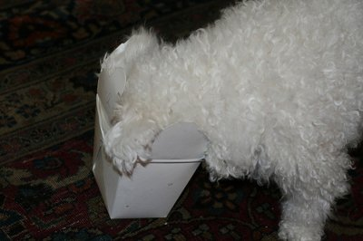 A Bichon Frise diet should not include food like Chinese takeout.