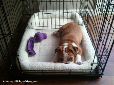 Crate Training A Blind Dog