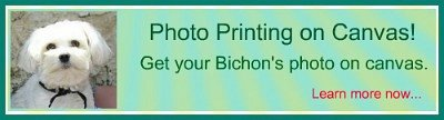 Bichon FRise photo printing on canvas