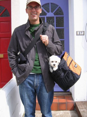 Bichon frise puppies like to ride in small dog carriers like this one