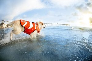 Dog with life jacket having fun in water